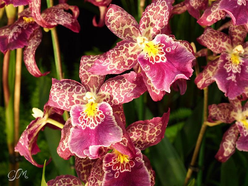 Esslinger Orchideentage 19.-21. September P9190011