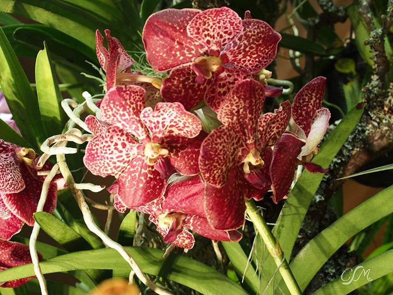 Esslinger Orchideentage 19.-21. September P9190014