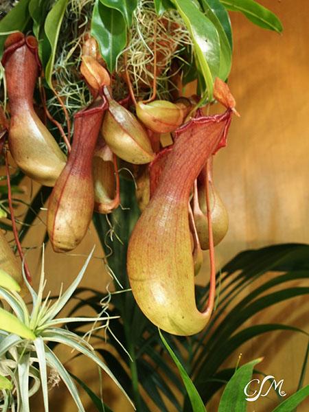 Esslinger Orchideentage 19.-21. September P9190015