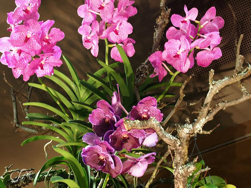 Esslinger Orchideentage 19.-21. September P9190016