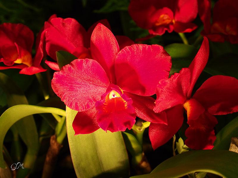 Esslinger Orchideentage 19.-21. September P9190017