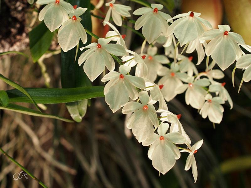 Esslinger Orchideentage 19.-21. September P9190019