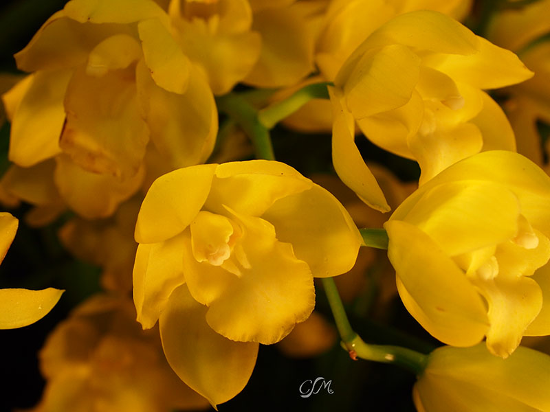 Esslinger Orchideentage 19.-21. September P9190020