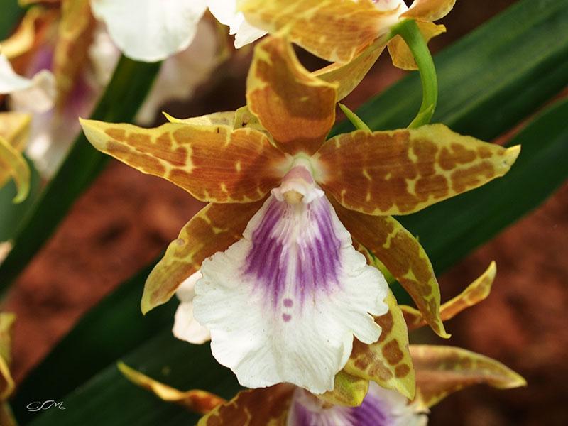 Esslinger Orchideentage 19.-21. September P9190021