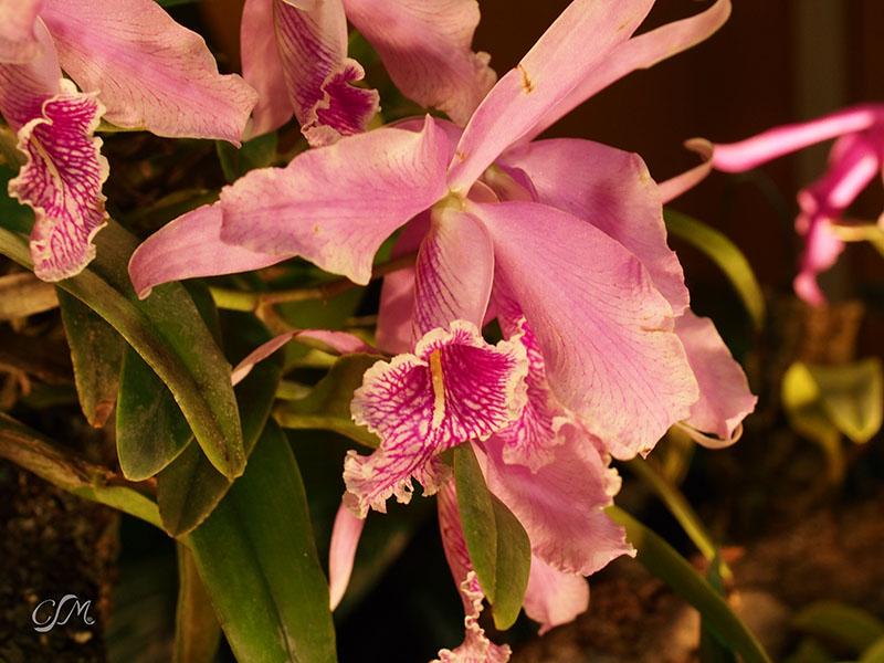 Esslinger Orchideentage 19.-21. September P9190023