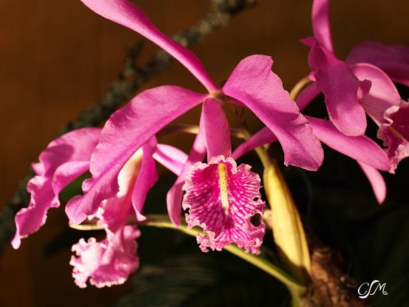 Esslinger Orchideentage 19.-21. September P9190025
