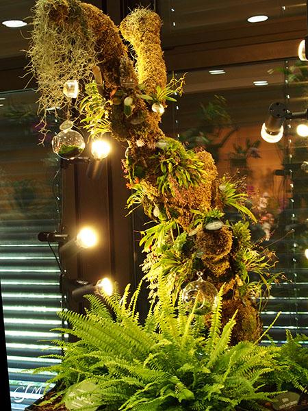 Esslinger Orchideentage 19.-21. September P9190028