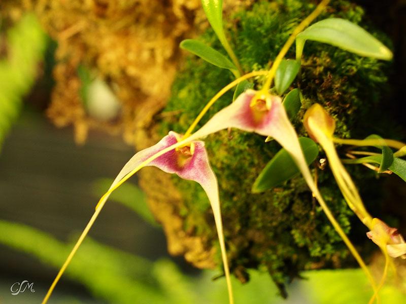 Esslinger Orchideentage 19.-21. September P9190029