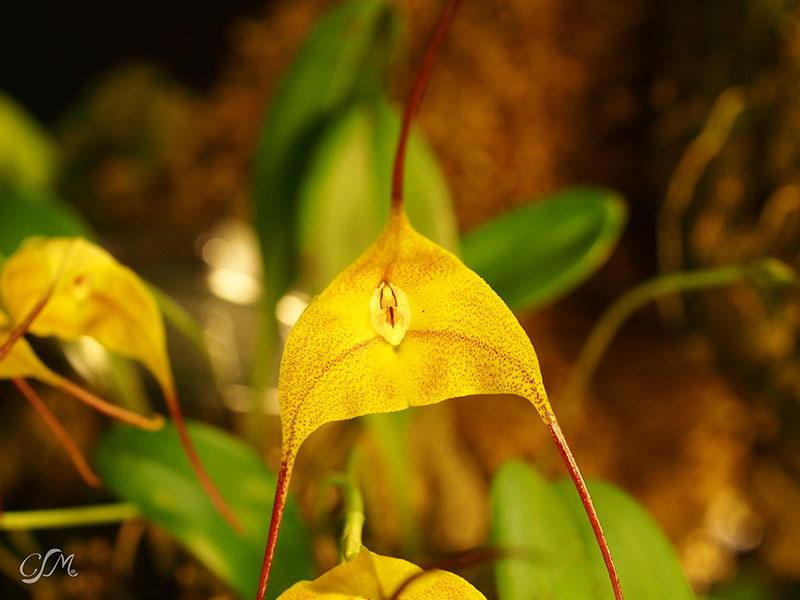 Esslinger Orchideentage 19.-21. September P9190030