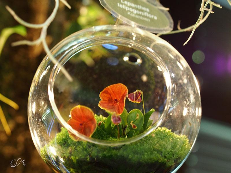Esslinger Orchideentage 19.-21. September P9190032