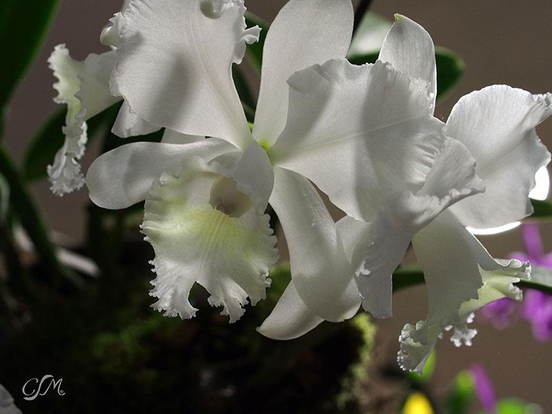 Esslinger Orchideentage 19.-21. September P9190036