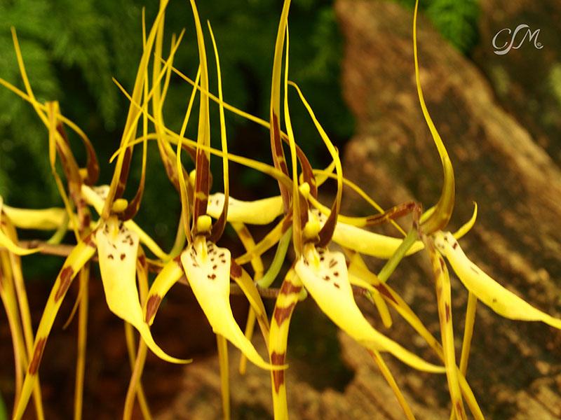 Esslinger Orchideentage 19.-21. September P9190037