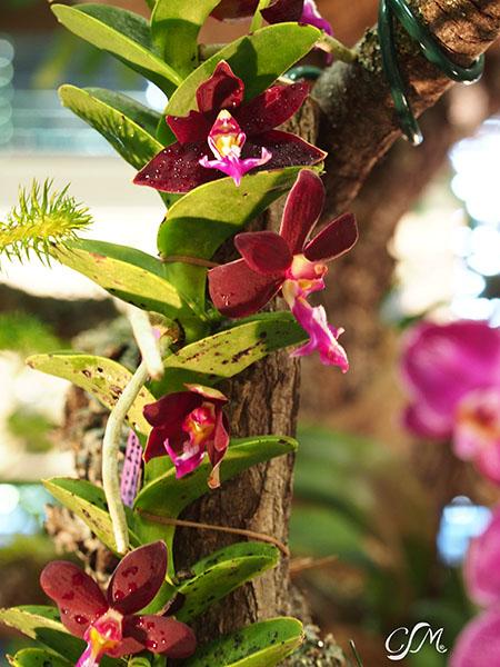 Esslinger Orchideentage 19.-21. September P9190046