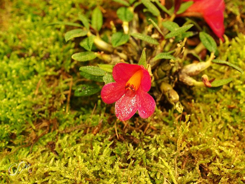 Esslinger Orchideentage 19.-21. September P9190048