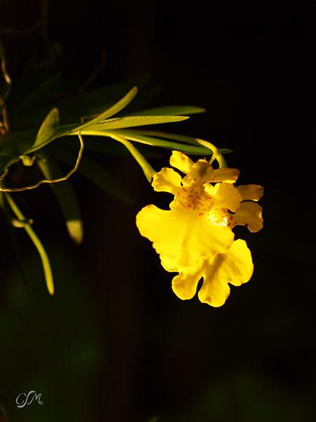 Esslinger Orchideentage 19.-21. September P9190050