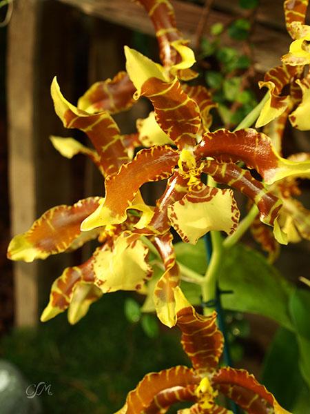 Esslinger Orchideentage 19.-21. September P9190051