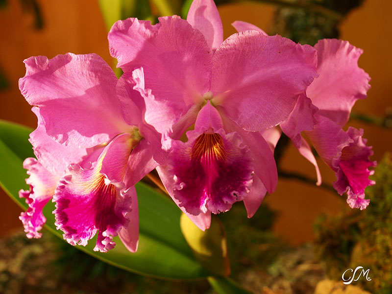 Esslinger Orchideentage 19.-21. September P9190052