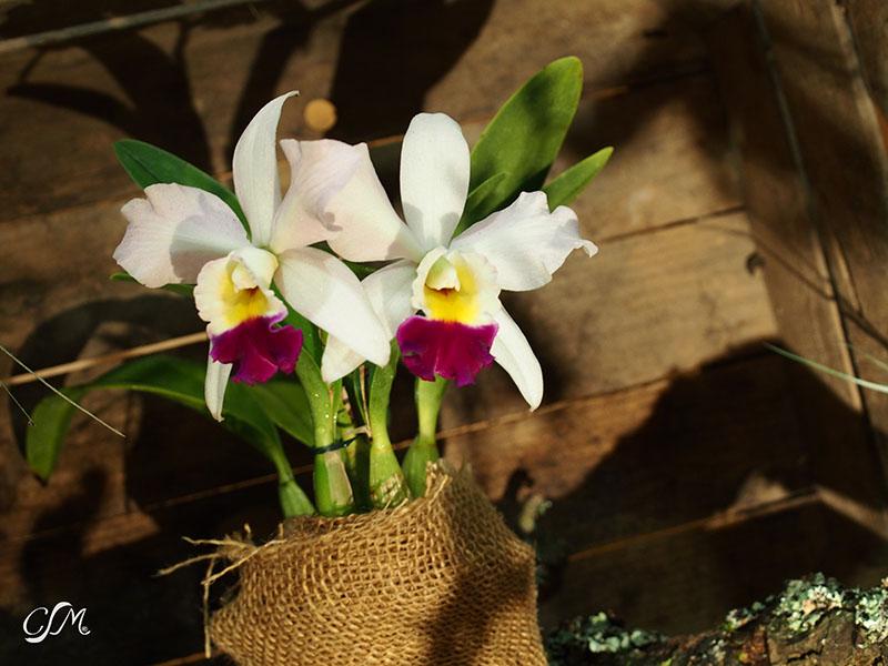 Esslinger Orchideentage 19.-21. September P9190053