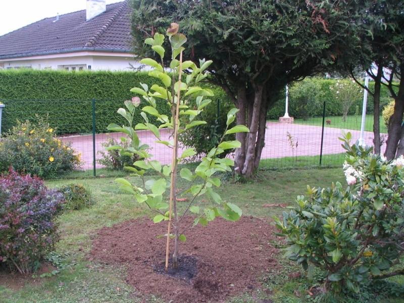 Magnolias - Page 14 Img_2913