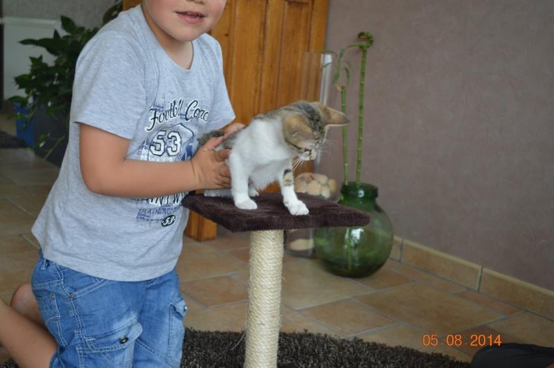 JOKE, chatonne tigrée et blanche, née début Mai 2014 Dsc_0310