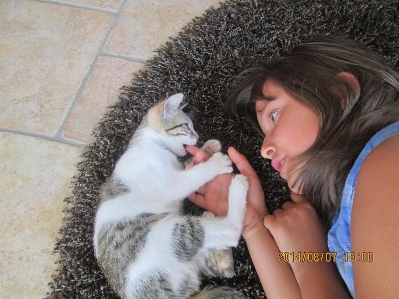 JOKE, chatonne tigrée et blanche, née début Mai 2014 Img_0314