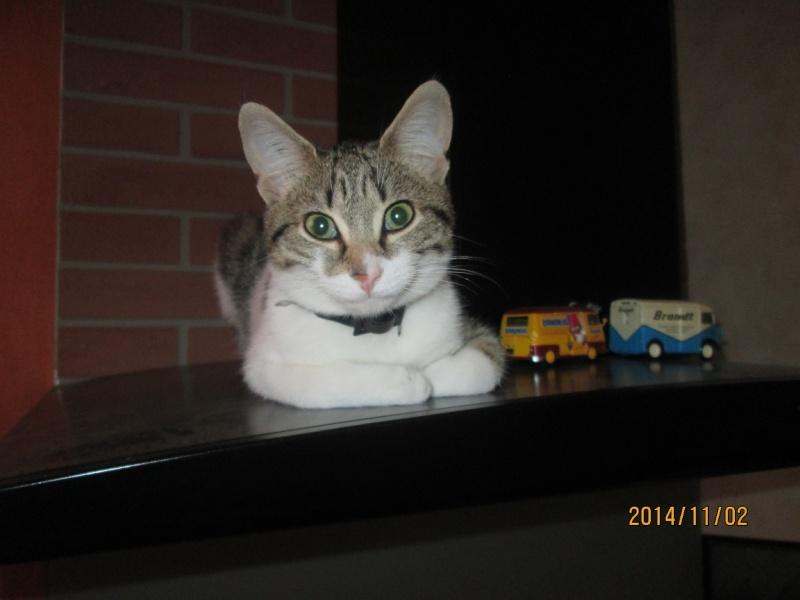 JOKE, chatonne tigrée et blanche, née début Mai 2014 Img_0711