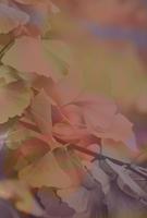 Nouveau design d'automne ? No_new10