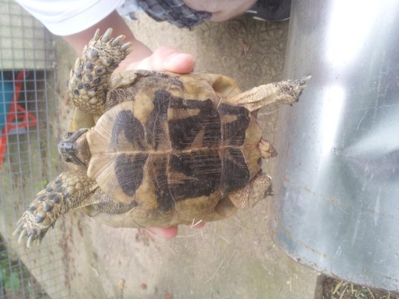 identification de ma tortue svp! 20140813