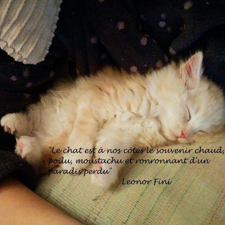 Proverbes sur les chats Img_5010