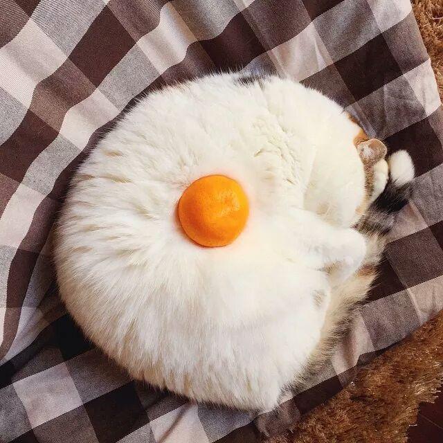 Images du jour sur les chats - Page 3 Img_5510