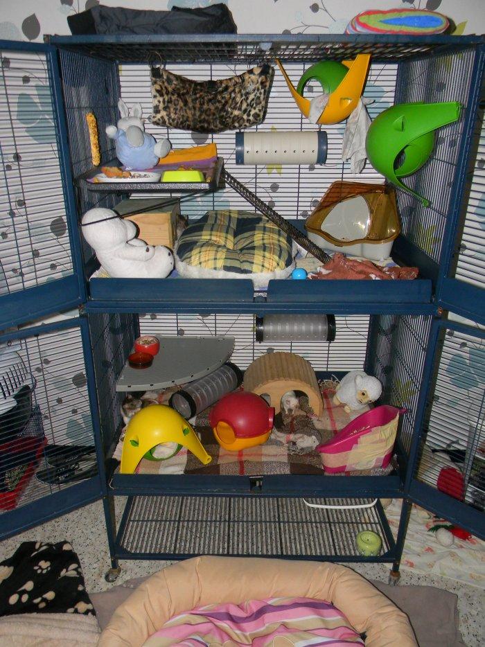 Photos de vos cages - Page 2 30745911