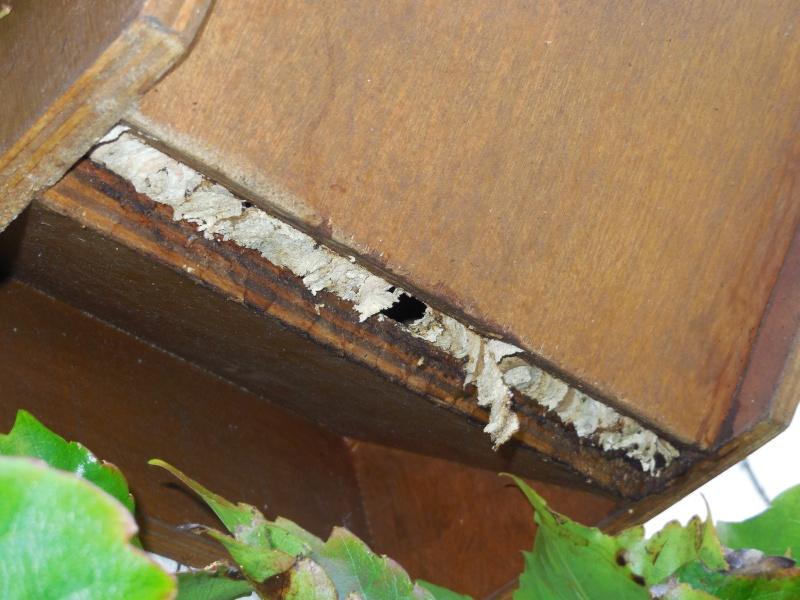 Nid de vespa crabro - Page 2 Fermet10