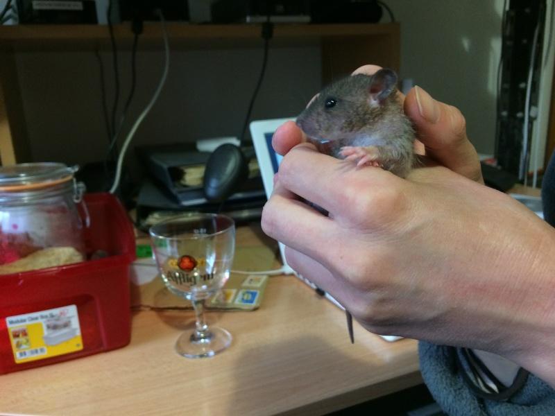 Et voici notre bébé Rat des champs : Ratatouille  Img_4110