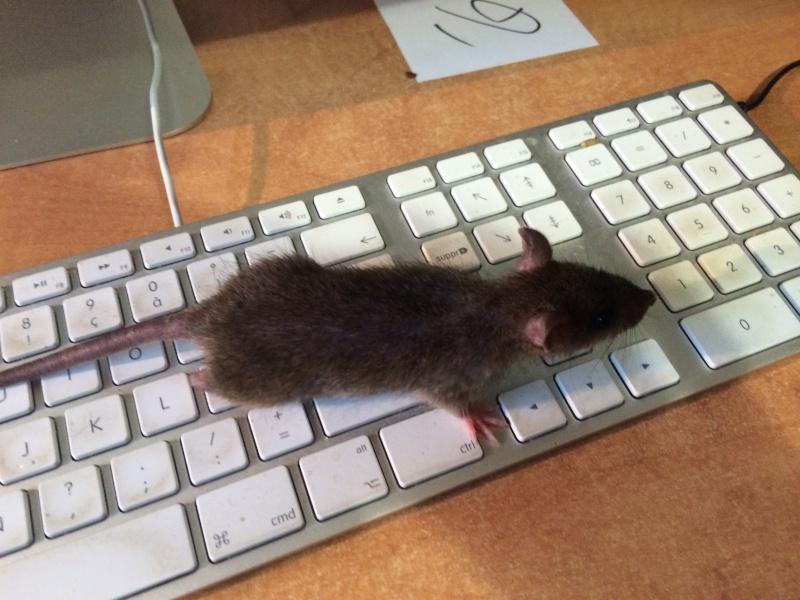 Et voici notre bébé Rat des champs : Ratatouille  - Page 4 Img_4211