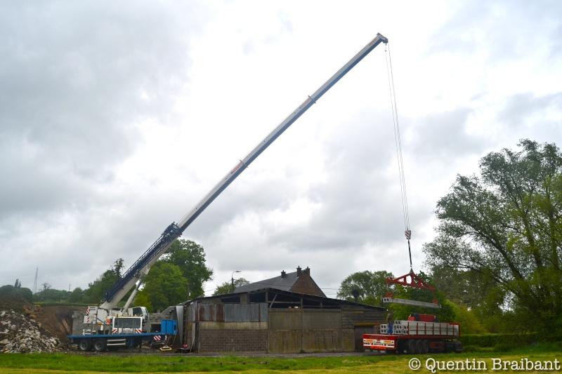 Les grues de HAVART (Belgique) Dsc_0117