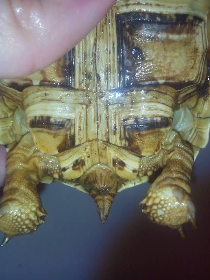 sexe de ma tortue ??? 9635412