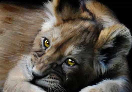 Lionceau triste Lionce12