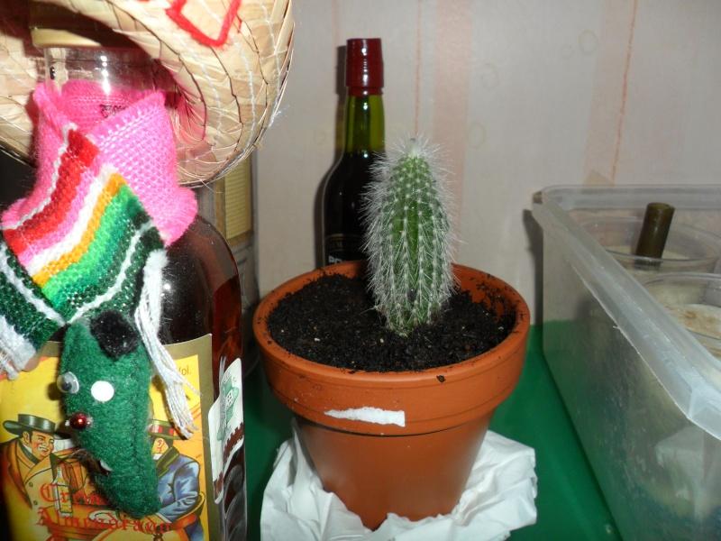 Mes bébés cactus - Page 2 Sam_0017
