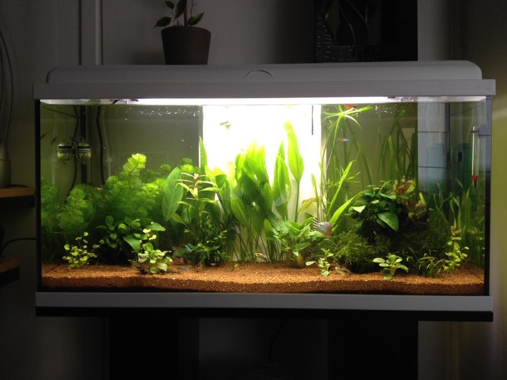 Balance entre CO2 et O2 / Risque pour les poissons.  Aquari10