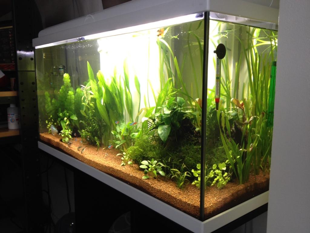 Balance entre CO2 et O2 / Risque pour les poissons.  Aquari11