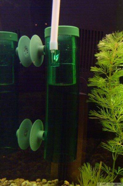 Balance entre CO2 et O2 / Risque pour les poissons.  Tetra_10