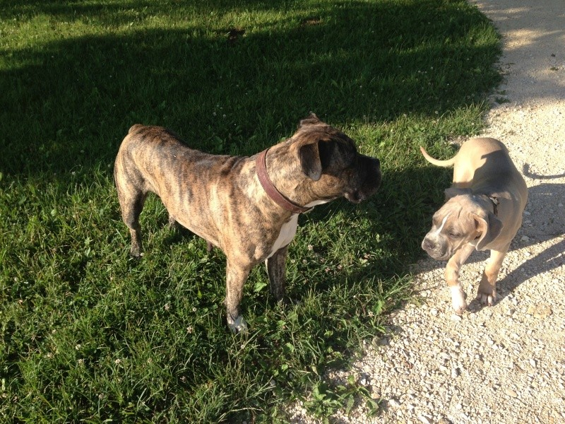 Le Dogue Allemand Img_1011