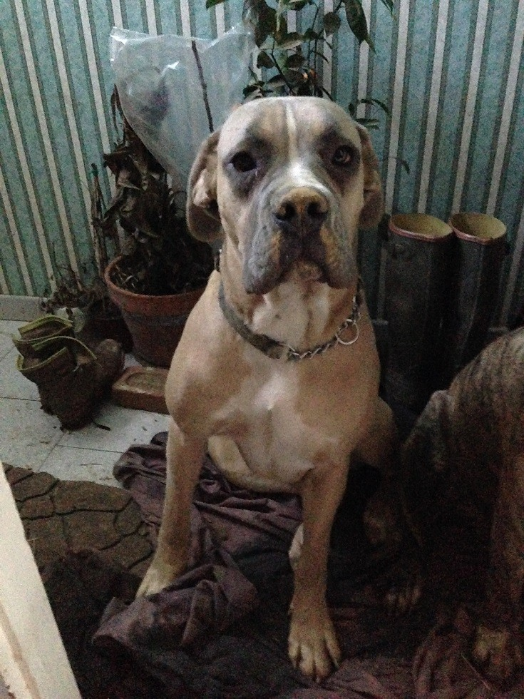Le Dogue Allemand Img_2112