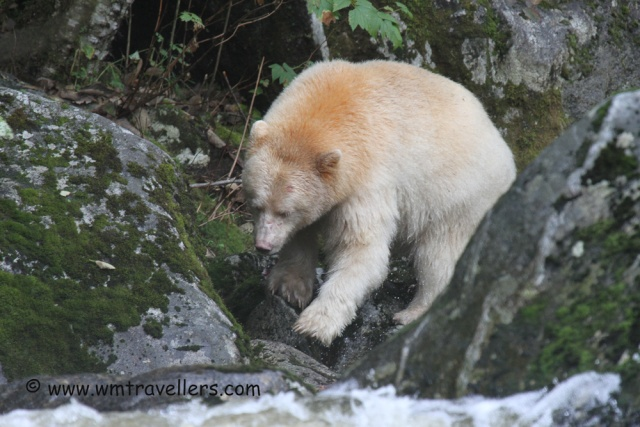 Bears of Many Colours Trip310