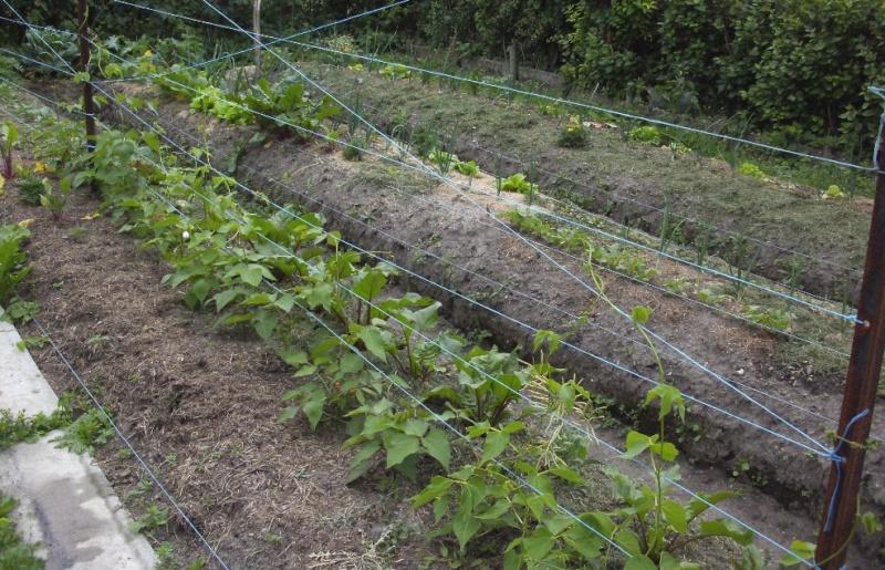 Essais de permaculture sur buttes. 12_a10