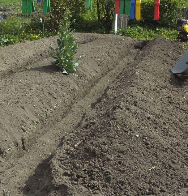Essais de permaculture sur buttes. 3_a10