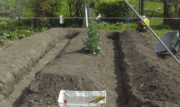 Essais de permaculture sur buttes. 4_a10