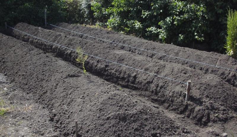 Essais de permaculture sur buttes. 5_a10