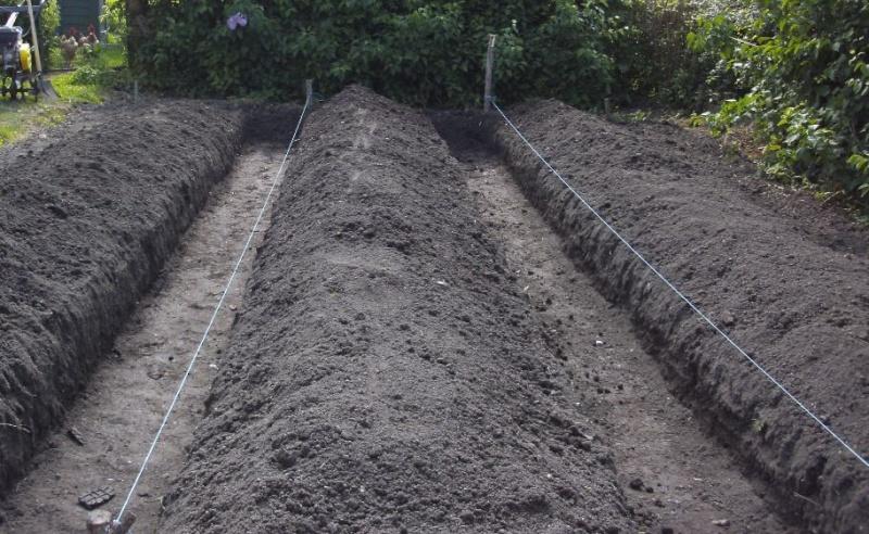 Essais de permaculture sur buttes. 6_a10