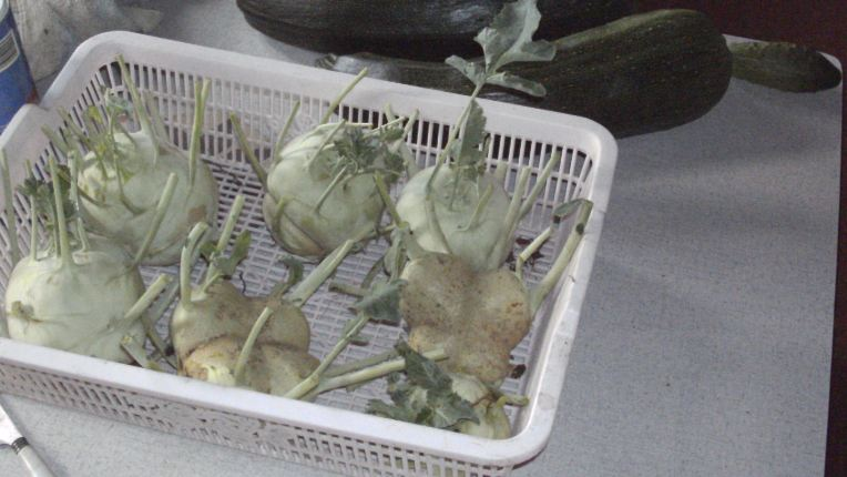 Essais de permaculture sur buttes. Choux_10